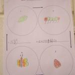 Hung Caterpillar Lifecycle