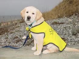 Guide Dog Visit!