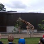 School Tour Fota June 2012 014